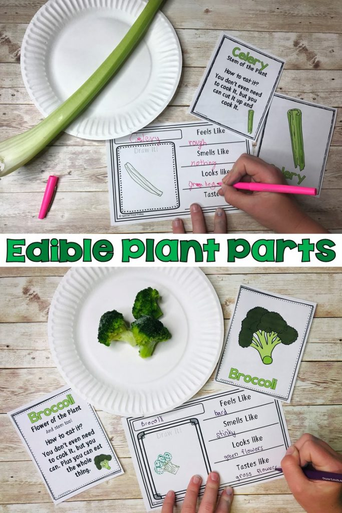 Edible Plant Parts Science Lab
